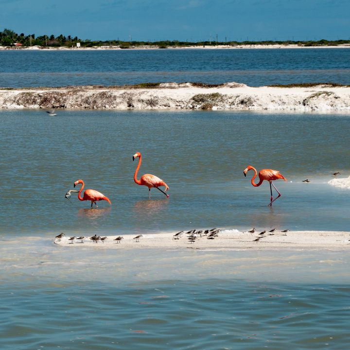 voyage au mexique, Rio Lagartos las coloradas, voyage au mexique all inclusive,voyage au mexique,, excursions, voyage au mexique, séjour au mexique, riviera maya, vacances au mexique, voyager au mexique, voyage au mexique